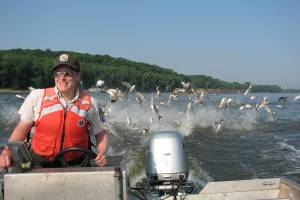 Silver Carp explosion on the Illinois River. Photo courtesy of the USFWS.