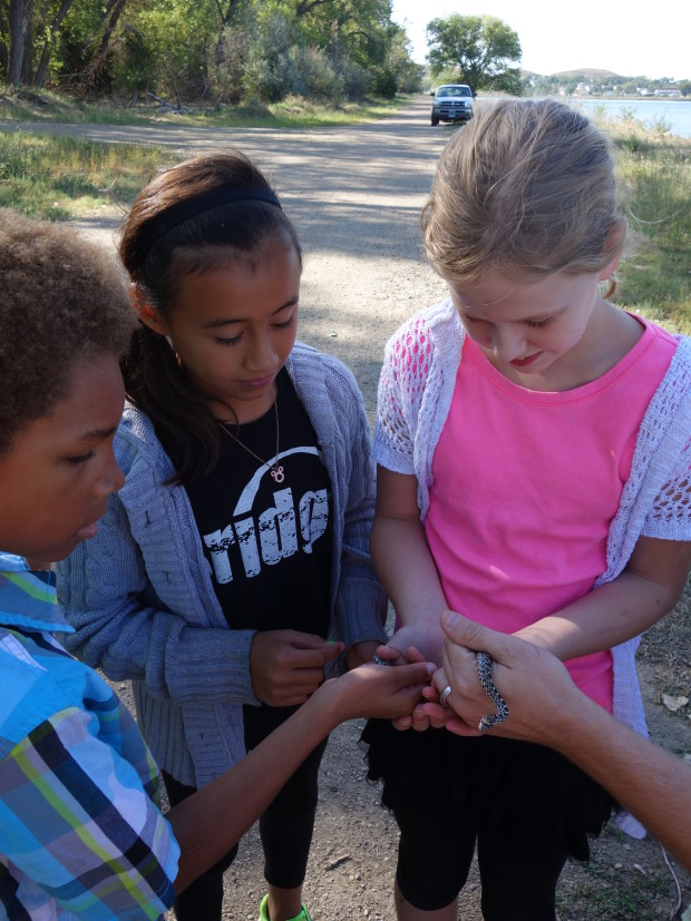 Sara would use her herpetological powers to find critters to share with students she met along her trip. photo courtesy of Sara Dykan